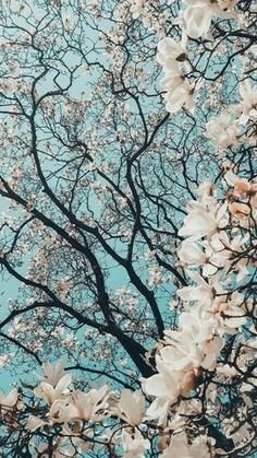 Aesthetic A.F. Wallpapers You NEED! – TAYLOR MADISON