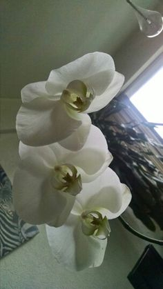 Bellas orquideas!