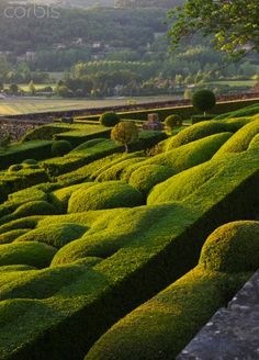 Topiary garden of the Château de Marqueyssac, Dordogne, France Garden Hedges, Topiary Garden, Formal Gardens, Outdoor Gardens, English Cottage, Parks, Famous Gardens, Garden Architecture, Garden Landscape Design