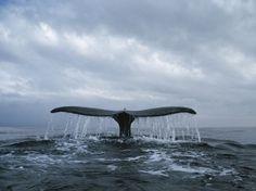 Valaiden katselumatka kahdelle Islannissa!