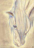 Head-mane study by GalopaWXY