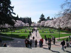 University of Washington quad in Spring http://www.payscale.com/research/US/School=University_of_Washington_(UW)_-_Main_Campus/Salary
