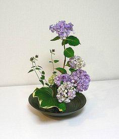 Ikebana by Sensyou: Hydrangea