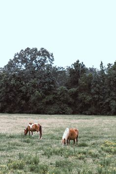 Cow, Photography, Animals, Image, Photograph, Animales, Animaux, Fotografie, Cattle