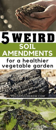 Organic Vegetable Gardening Tips: All of these soil additives can be mixed into your soil or even added to your compost pile. Using these items in your garden might seem weird, but they offer many benefits for improving soil in vegetable gardens. via You Should Grow · Gardening Tips & Ideas · Homesteading For Beginners · Simple Living #VegetableGarden