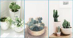 Suculentas y cactus - Contenido seleccionado con la ayuda de http://r4s.to/r4s