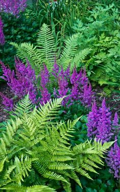 Ferns are so beautiful & one of my favorite plants & especially look good next to purple flowers