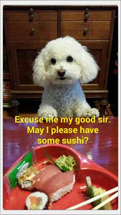 Excuse me my good sir. May I please have some sushi?
