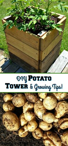How To Make And Grow In A Potato Tower Box &; How To Make And Grow In A Potato Tower Box &; Reuse Grow Enjoy Reuse Grow […] for beginners step by step