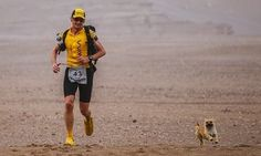 Tiny Stray Dog Finds Her Human When She Joins Him For 77 Miles In Race   The Huffington Post