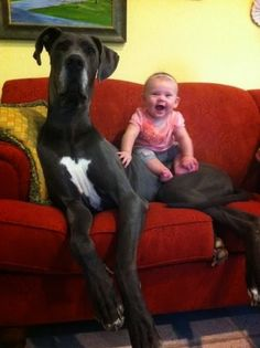 5 Biggest dogs you have ever seen, Click the pic for full list
