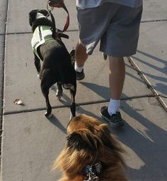 January is National Walk Your Dog Month.