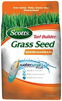 Got Sandy Soil Know The Best Grass Seeds For Sandy Soil Turf