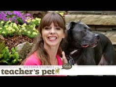 Most current No Cost How to teach your dog how to walk. Ideas How Are Pets Provided Simple Obedience Training ? It includes the most basic commands you will used Dog Commands Training, Service Dog Training, Agility Training For Dogs, Basic Dog Training, Dog Agility, Leash Training, Socializing Dogs, Positive Dog Training, Dog Behavior