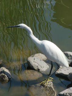 Canary Islands Photography: Birdlife aves Maspalomas animales animal  Gran Can...