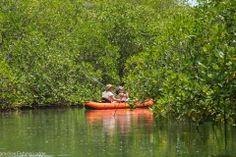 Paddling through the mangroves Isla Parida.  #islaparida