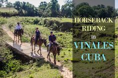 Horseback Riding in Viñales Valley is the best way to experience the heart of Cuba& Cigar industry. Cuba Travel, Mexico Travel, Solo Travel, Flights To Cuba, Cuba Itinerary, Trinidad Cuba, Visit Cuba, Vinales, Amor