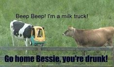 I'm a milk truck! Go home Bessie, vou're drunk Beep beep im a milk truck - cow meme from Items tagged as Drunk Meme Funny Animal Pictures, Funny Photos, Funny Animals, Cute Animals, Funny Cows, Animal Pics, Drunk Pictures, Talking Animals, Farm Animals