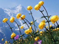 Guia jato: wallpaper flores