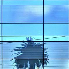 __Blue palm by roB_meL (AWAY), via Flickr