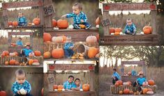 Pumpkin Stand Photography Prop