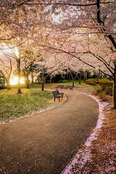 Walking path from the FDR memorial to the tidal basin - Washington DC, USA