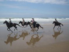 Wild Coast Horse Trails|Horse Riding Holidays|Horse Safaris|Beach Riding|Wild Coast Horseback Adventures|