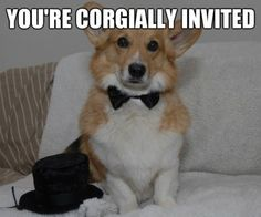 Top hat corgi. Fit to meet the Queen of England!