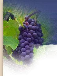The WIne Doctor - Dr Philip Norrie – Chronology of wine as a medicine