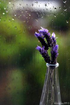 ~*Lavender and rain drops
