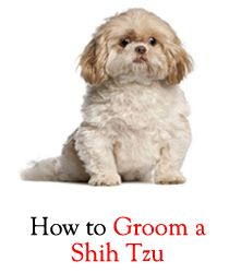 There is always a fine line to draw between firmness and loving and caring while handling and grooming our little puppies. Take care of your pal!!