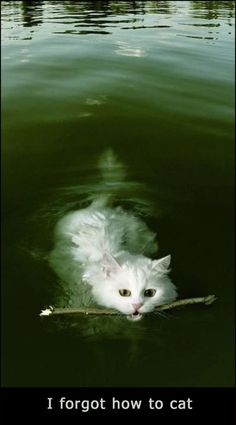 Raised by fish lol never knew that they were a cat