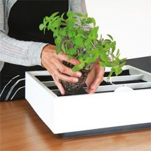 Easy planting Karoo comes with potting soil for vertical use as standard. 9 plants for each Karoo
