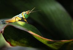A Collection of Photos of Natures Smallest Creatures - it's a Bug's Life