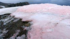 Selbstverstärkender Effekt: Blutschnee lässt Gletscher schmelzen