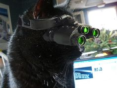 Kitty's new night vision goggles #cats ahh!! i will get them someday haha is that somebody hiding in the trees lol