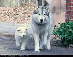 Partners In Crime • dog dogs puppy puppies cute doggy doggies adorable funny fun silly photography