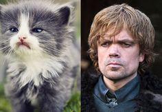 Game Of Thrones Arya Cat
