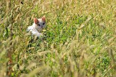 Cat in the grass by ste.it, via Flickr