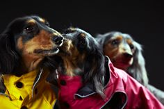 Rukka Raincoats, overalls, fleecewear, and knitwear for dogs Pet Clothes, Raincoat, Spring Summer, Pets, Animals, Style, Rain Jacket, Swag, Animales