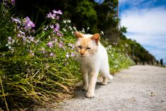 thrivers on islands (Ogi Island, Kagawa) American Shorthair Cat, British Shorthair, Funny Cats, Funny Animals, Spring Pictures, Desktop Pictures, Ginger Cats, Animal Wallpaper, Domestic Cat