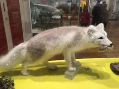 Royal Ontario Museum Royal Ontario Museum, Kangaroo, Animals, Baby Bjorn, Animales, Animaux, Animal, Animais