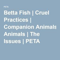 Betta Fish | Cruel Practices | Companion Animals | The Issues | PETA