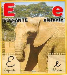 Material educativo para maestros: Abecedario con imagenes reales Elephant, Animals, Board, Index Cards, Activities, Animais, Animales, Animaux