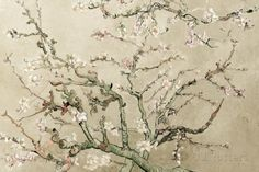 Almond Blossoms - Cream Posters at AllPosters.com