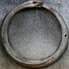 Ouroboros in Pere Lachaise. The ouroboros is traditionally depicted as a serpent or dragon swallowing its own tail, resulting in a circle. The ouroboros is regarded as a symbol of infinity and renewal.  It has also been used as a symbol for totality, mercury, and truth.