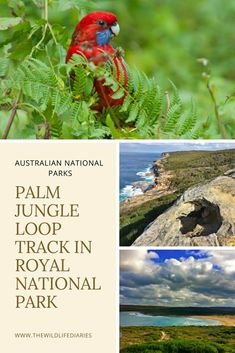 Palm Jungle Loop Track in Royal National Park New Holland Honeyeater, Scotland Hiking, Waterfall Trail, Hiking Europe, Rock Pools, Best Hikes, Life Is An Adventure, The Bikini, Australia Travel