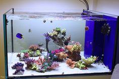 Wall Aquarium, Saltwater Aquarium Fish, Aquarium Setup, Aquarium Design, Saltwater Tank, Marine Aquarium, Reef Aquarium, Nano Reef Tank, Reef Tanks