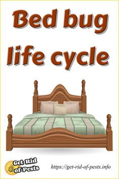 Bed bug life cycle, Bed bug infestation & the modern bed bug treatment. What to do about bed bugs and how to treat bed bug bites? 45 facts about bed bug life cycle, infestation & bites #bedbugs, #bedbugbites  via @https://www.pinterest.com/GetRidOfPests