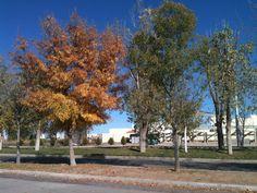 El otoño que me llegó en invierno.